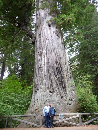 Historic Requa Inn: THE Big Tree