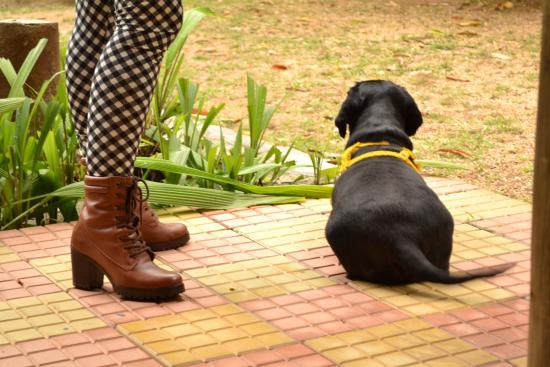 Vassouras: Aceitam animais de estimação