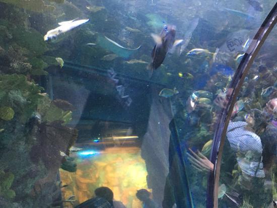 Picture Of Audubon Aquarium Of The Americas