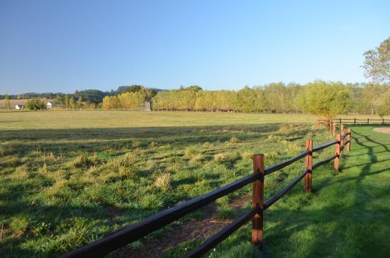 Hopewell Bed & Breakfast : Cow pasture