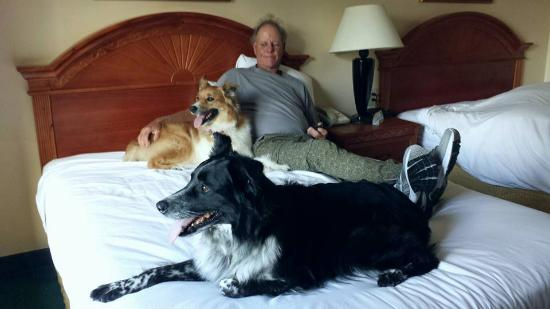 Days Inn & Suites Camp Verde Arizona: Days Inn in Camp Verde-Very Dog Friendly