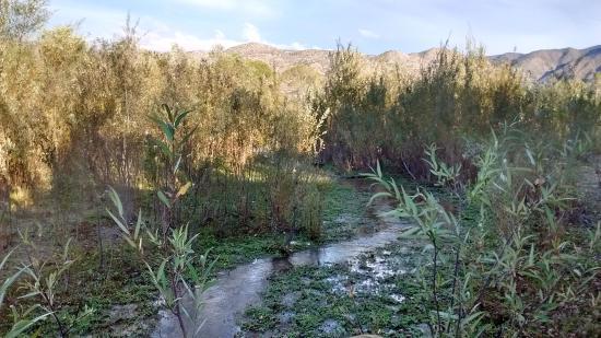 Meling Ranch: Arroyo que pasa a unos metros del rancho
