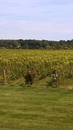 Saltwater Farm Vineyard : the vineyard