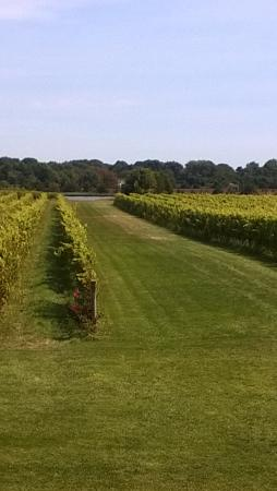 Saltwater Farm Vineyard : can you picture the white wedding aisle?