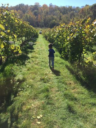 Falconer Vineyards : Vineyard