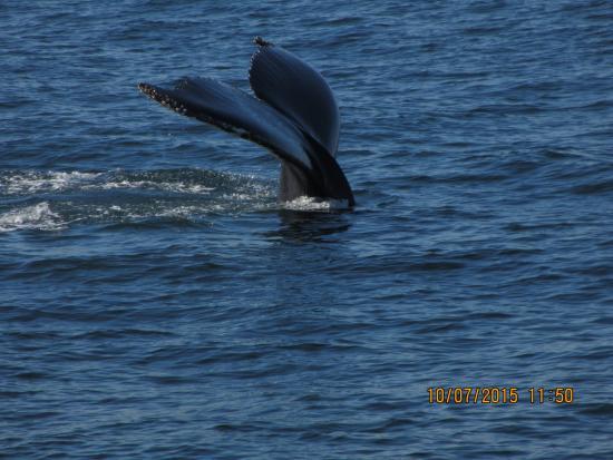 Cape Ann Whale Watch: Whale
