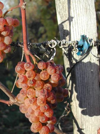 Maison des Vins du Jurancon