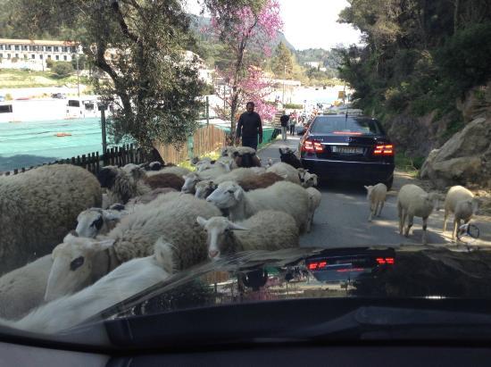 Corfu Taxi Private Tours : Palaiokastritsa