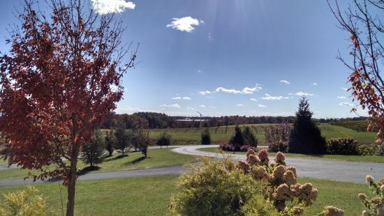 Mount Crawford, VA: Winery views...rolling hills