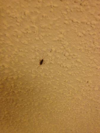 Hampton Inn & Suites Williamsburg Historic District: Second bug found on ceiling.
