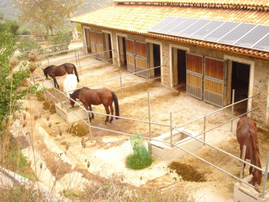 Avdou, Yunani: αλογα