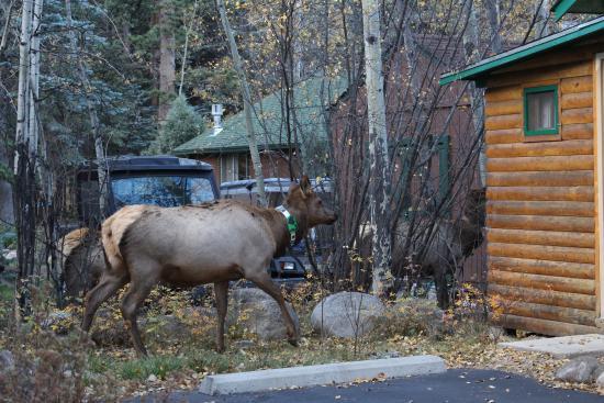 Idlewilde by the River: Elk visiting