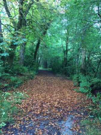 Donegal Town, Irlanda: peaceful