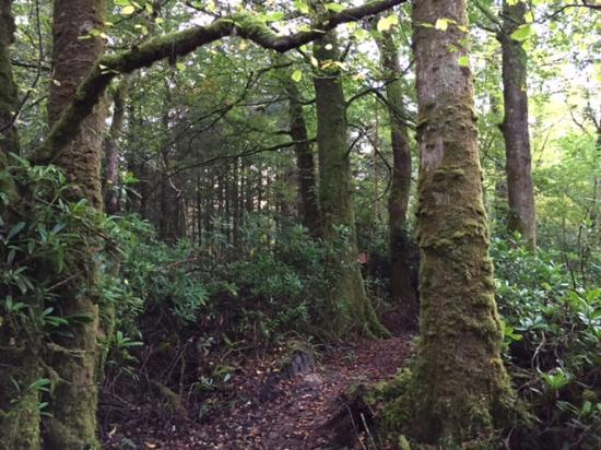 Donegal Town, Irlanda: on the forest walk