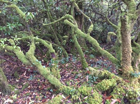 Donegal Town, Irlanda: moss covered trees