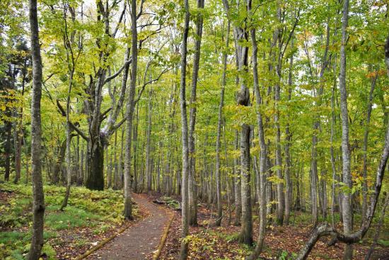 Dakedai Nature Observation Woods