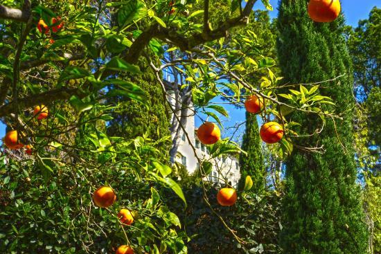 Jardines - Bild von Sa Torre Cega, Cala Rajada - TripAdvisor