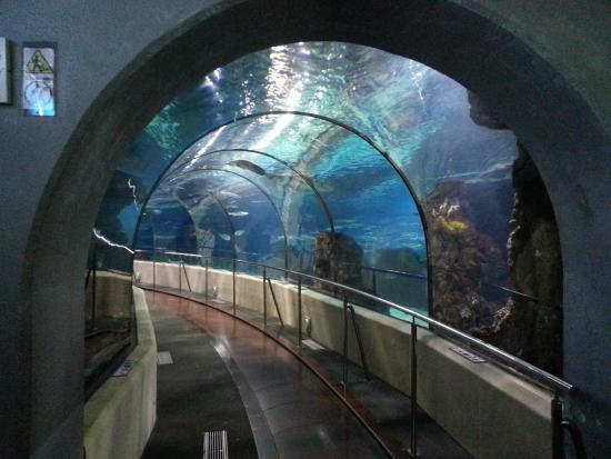 Picture Of L Aquarium De Barcelona Barcelona Tripadvisor