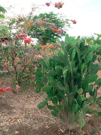 Provincia de Antsiranana, Madagascar: Gardens