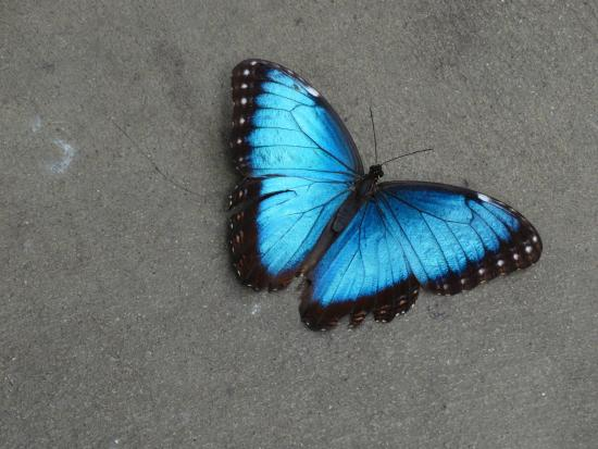South Deerfield (MA) United States  city images : Magic Wings Butterfly Conservatory and Gardens: Magic Wings Butterfly ...