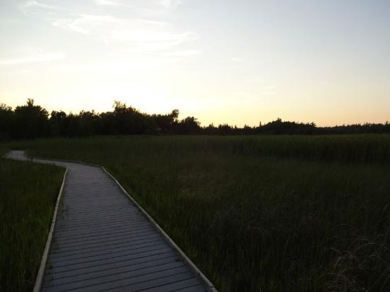Brighton, Canadá: Marsh Boardwalk