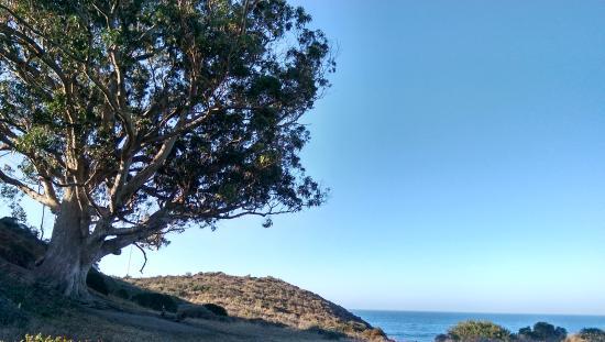 Point Reyes Hostel: Eucalyptus tree by the ocean