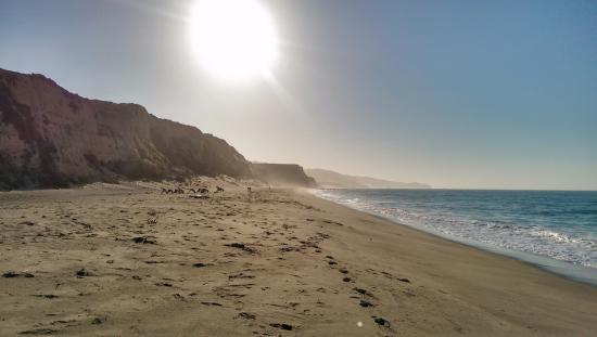 Point Reyes Hostel: Santa Maria Beach, looking south (see the yogis in the photo?!?)