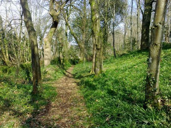 Kingswear Park Club: the woodland walk