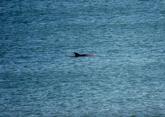 Long Beach Township, NJ: porpoises