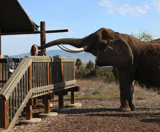Vision Quest Safari Bed U0026 Breakfast: Feeding The Elephant At Breakfast