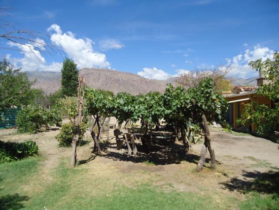 Hostel Lo de Chichi: Parque