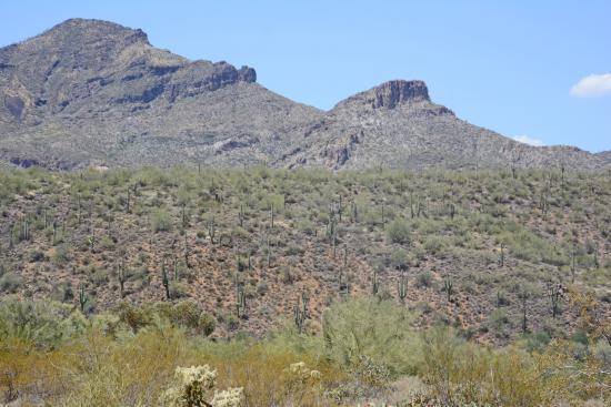 Cave Creek Regional Park: Looking north.