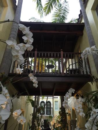 The Orchid House: Just love orchids!