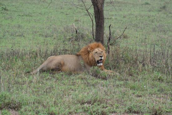 Kipori Safari - Day Trips