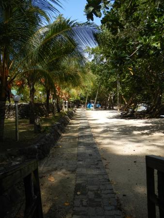 The walk to the swimming pool and dive shop.