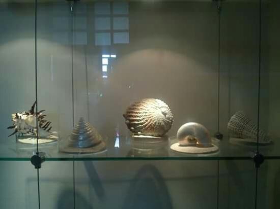 Museo Del Mar Mexico