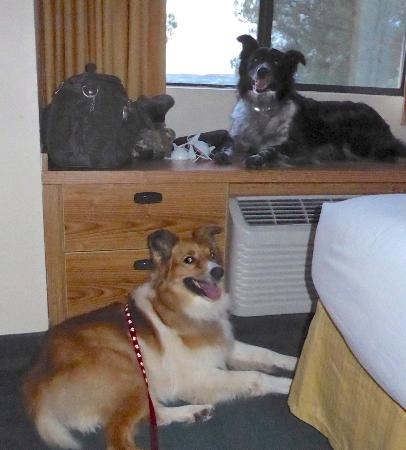 Days Inn & Suites Camp Verde Arizona: My dogs loved the room!