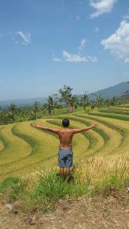 Sudaji Guest House: Rice terra panji