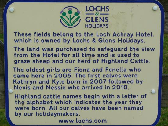 Loch Achray Hotel: About the Highland Cattle