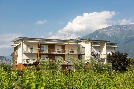 Hotel Al Maso: Our vineyard