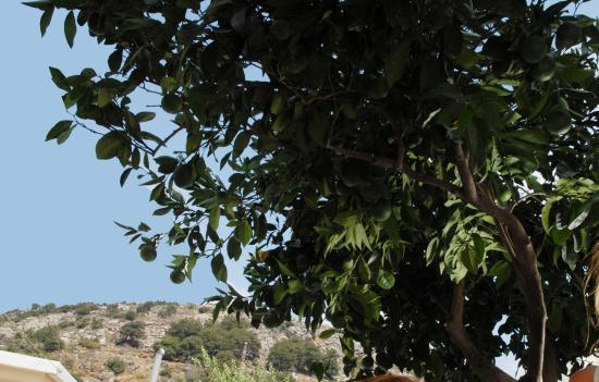 Hotel Lazos - Zoniana Crete