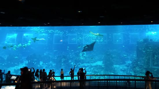 Open ocean tank picture of s e a aquarium sentosa for Oceanic fish tanks