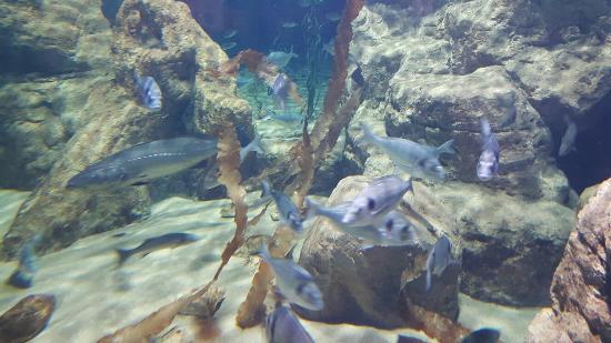 ... sculptures - Picture of Malta National Aquarium, Qawra - TripAdvisor
