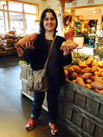 Amherst, MA: Giant sweet potatos