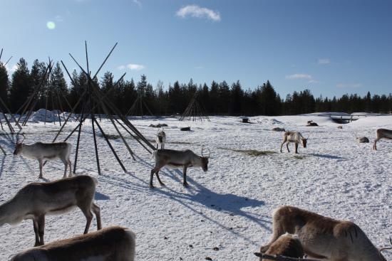 Kopara Reindeer Park