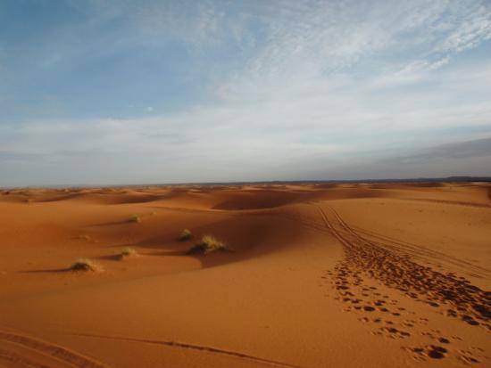 Sahara Garden: Désert Merzouga