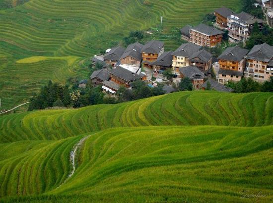 Longsheng County, China: Рисовые террасы Дажай