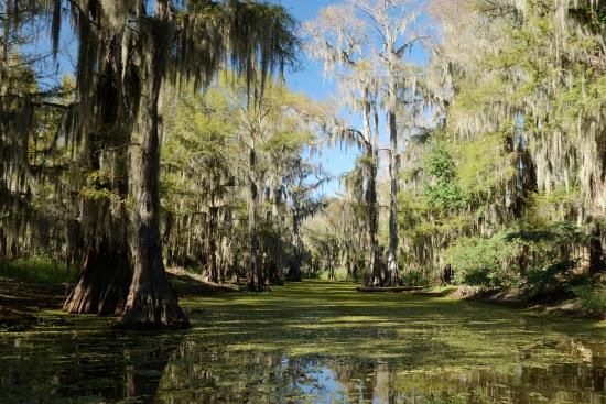 Caddo Outback Backwater Tours: Taken on the tour