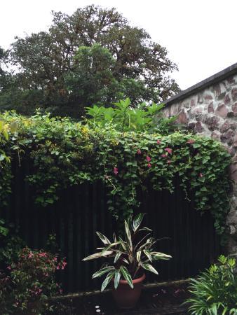 Poas Volcano Lodge: Garden