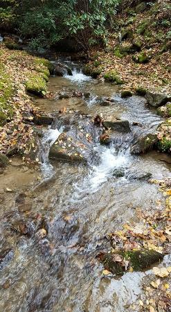 Timberwolf Creek Bed & Breakfast: The Stream